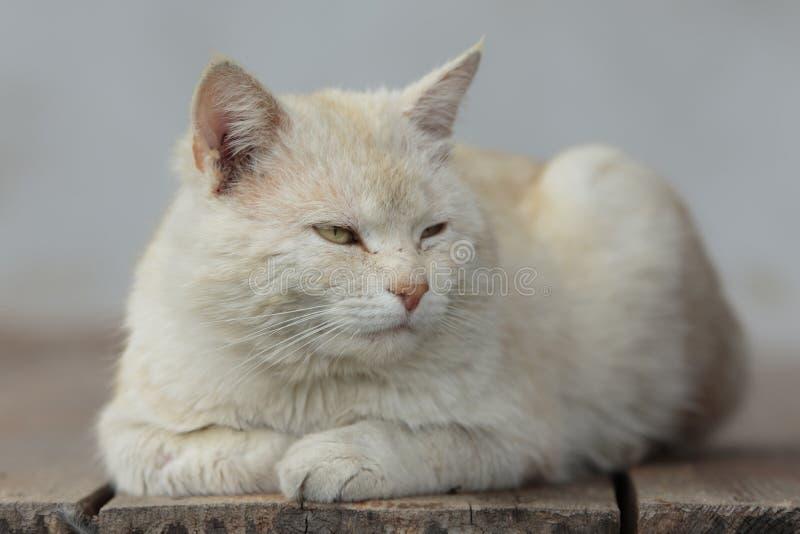 Ljusa rödaktiga Cat Relaxes arkivbilder