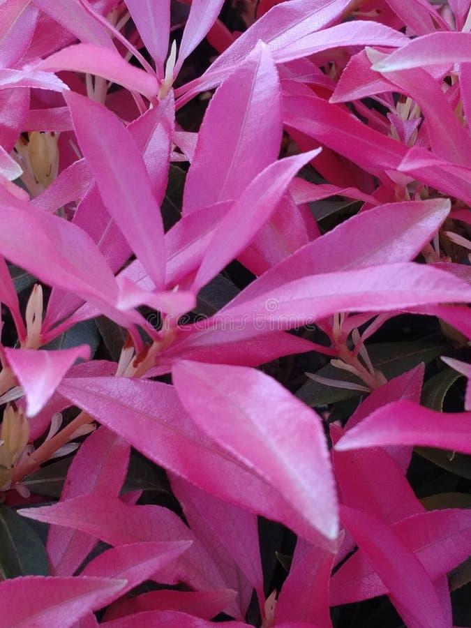 Ljusa rosa färgblommor royaltyfri foto