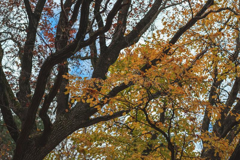 Ljusa sceniska filialer av det stora trädet i nedgångskogen, livlig färgrik natur arkivbild