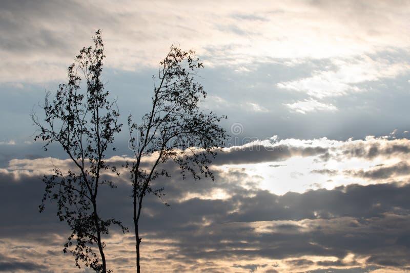 Ljusa solhimmelträd och moln i afton arkivfoto