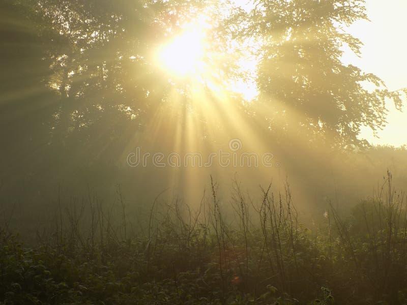 Ljusa strålar för dimmig gryning royaltyfria foton