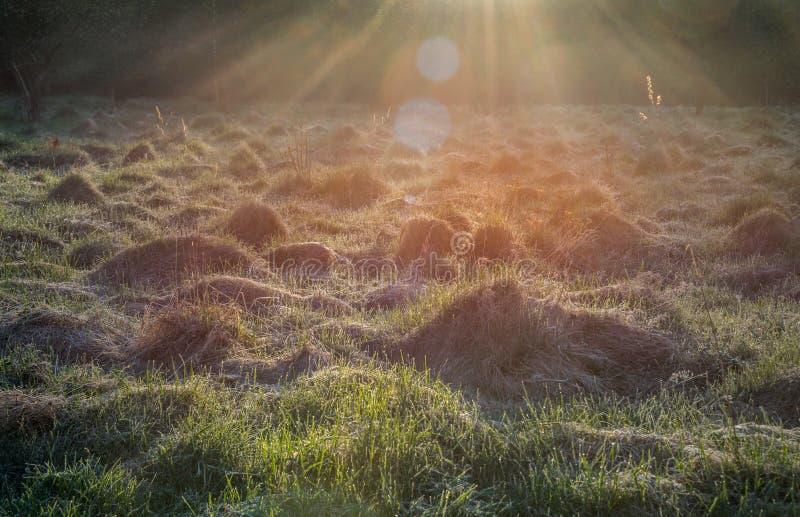 Ljusa strålar för soluppgång royaltyfria bilder