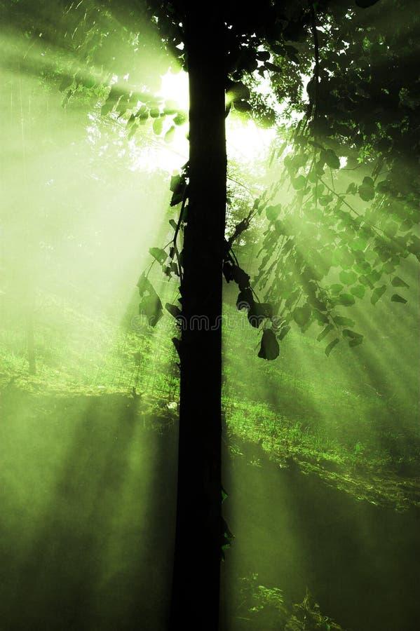 ljusa strålar sun treen royaltyfri bild