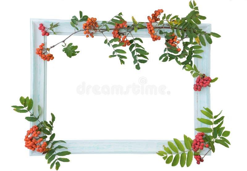 Ljusa trätappningtappningram och bär av den röda höströnnen på konturen på en ljus bakgrund Isolat på vit backgr royaltyfria foton