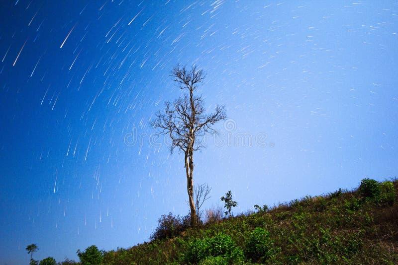 Ljusare Joshua Tree Star Trails, stjärnaslingor och skyttestjärna över träden royaltyfri bild
