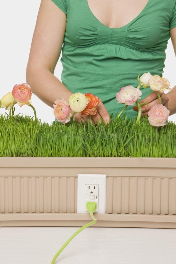 ljusare plantera för framtid royaltyfria foton