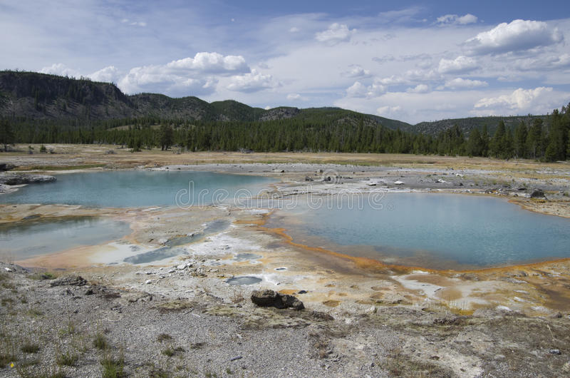 Ljusbrun handfatYellowstone nationalpark arkivbilder