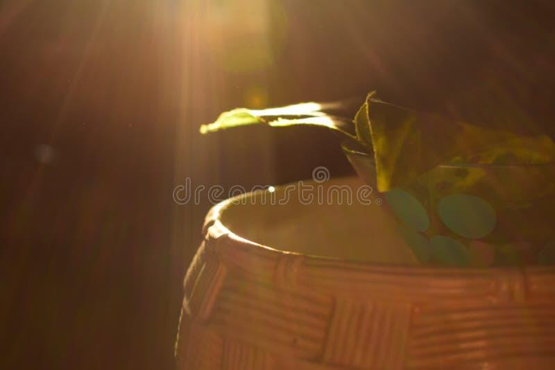 Ljuset som faller strålarna arkivfoto