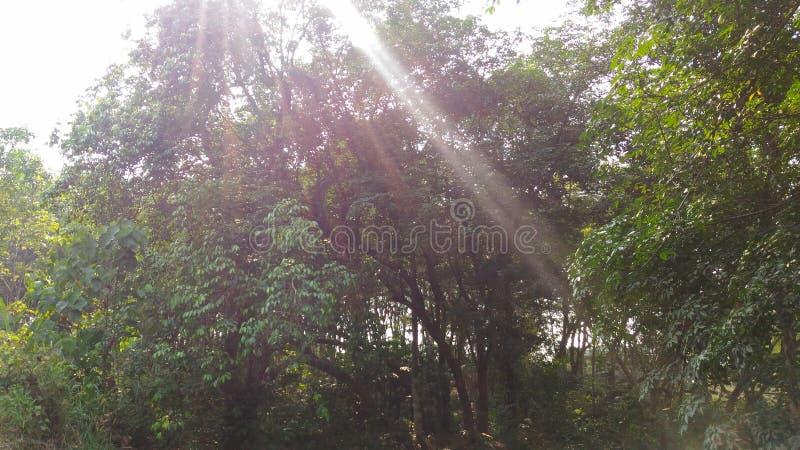 Ljuset till och med träden royaltyfri foto