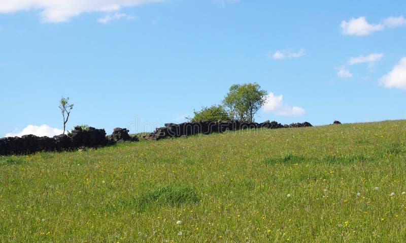 ljust - äng för grönt gräs som täckas i vårblommor på en backe med att smula gamla träd för stenvägg och blå solig himmel fotografering för bildbyråer
