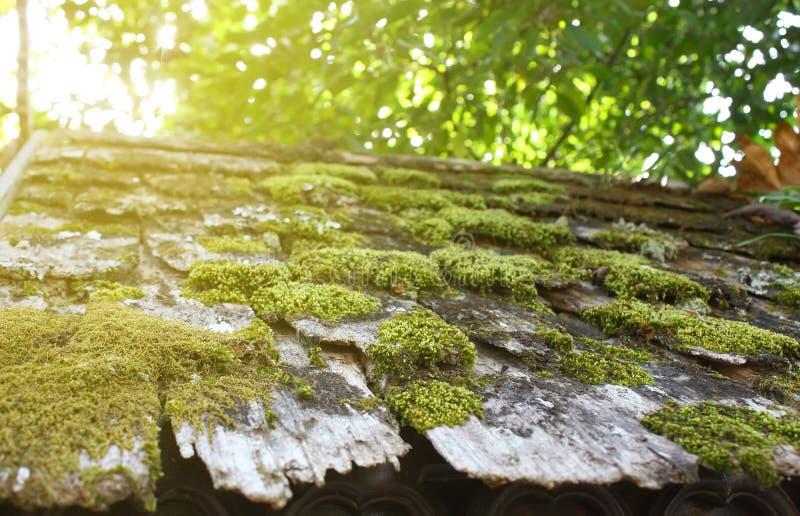 Ljust - gräsplan av det mossiga wood taket i lantliga Japan arkivfoton