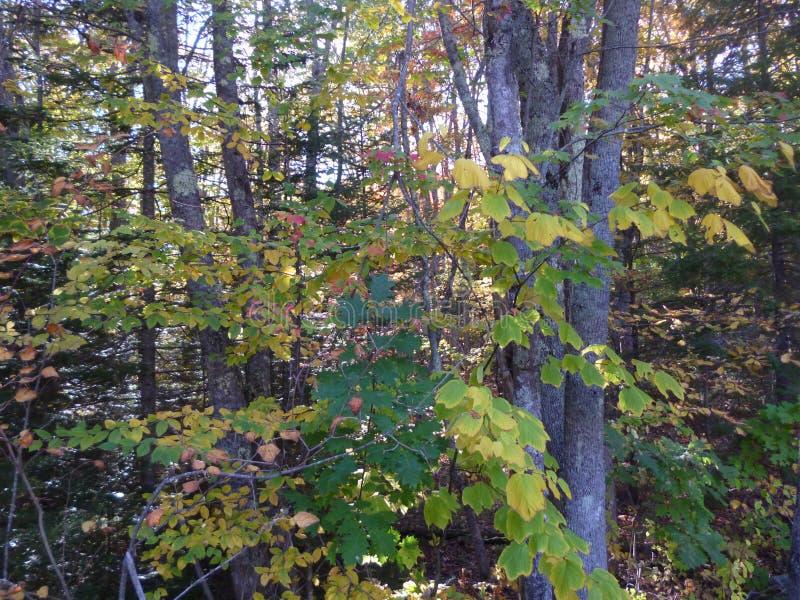 Ljust - gräsplan- & gulinghöstskog royaltyfria bilder