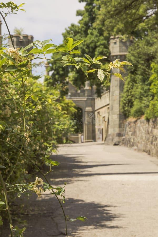 Ljust - gräsplanfilialer av blomningbuskar på bakgrunden av forntida väggar och torn av den Vorontsov slotten arkivbilder