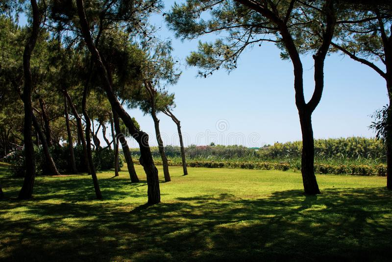 Ljust - grön gräsmatta i en röjning med knotiga träd mot den blåa himlen H?rligt landskap i Turkiet Massor av gr?nska arkivfoton