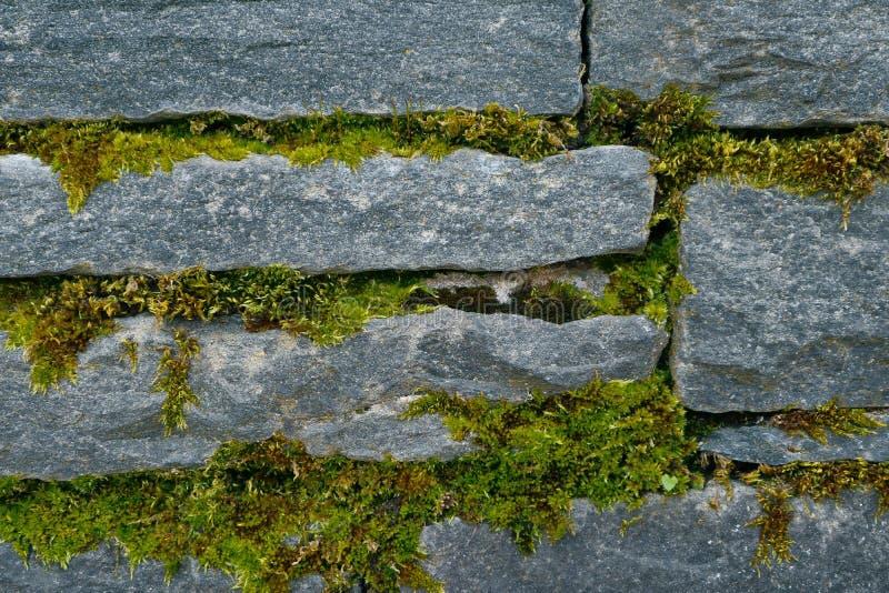 Ljust - grön mossatextur på stentegelstenväggen Fotodepicti royaltyfri fotografi