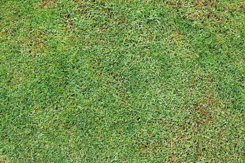 Ljust - grön ny gräsbakgrund royaltyfria foton
