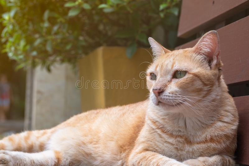 Ljust - orange katt som ligger på en träbänk royaltyfri foto