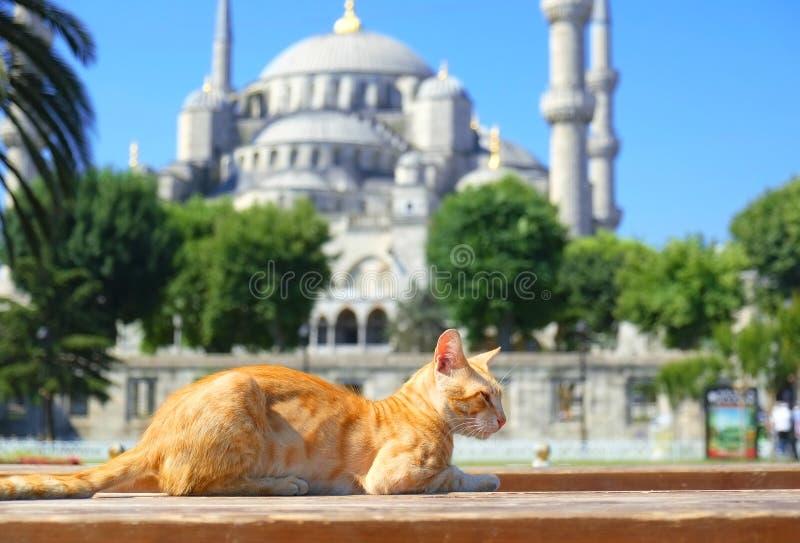 Ljust rödbrun katt framme av den Sultan Ahmet moskén arkivbilder
