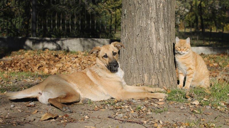 Ljust rödbrun katt- och hundsammanträde under ett träd arkivbilder
