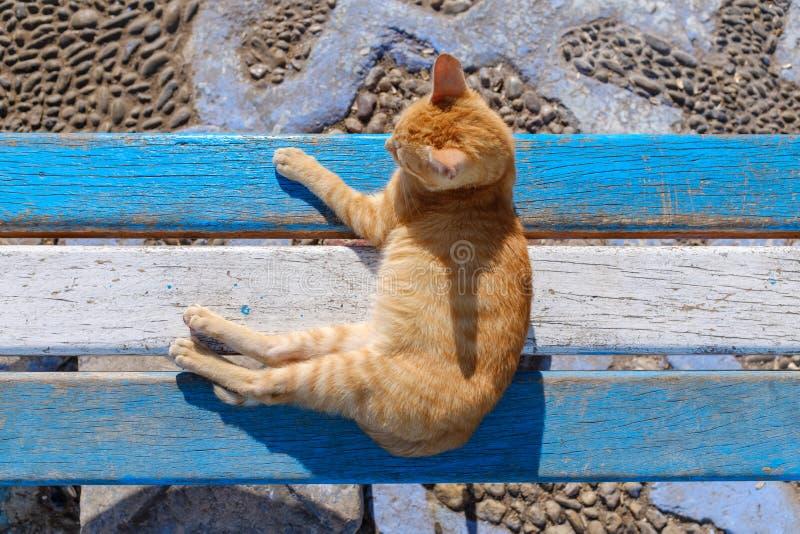 Ljust rödbrun katt på blå och vit bänk royaltyfri foto