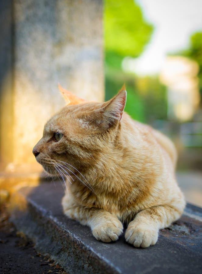 Ljust rödbrun katt på grav arkivbild