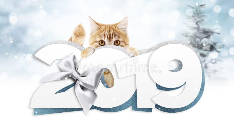 Ljust rödbrun katt som visar text för lyckligt nytt år 2019 med silverband b vektor illustrationer