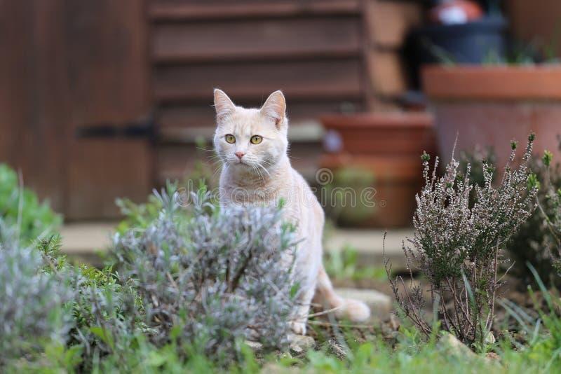 Ljust rödbrun kattplayin i trädgård arkivfoto