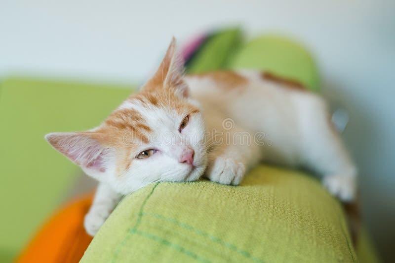 Ljust rödbrun kattpotthusdjur hemma på liggande sova för soffasoffa royaltyfri bild