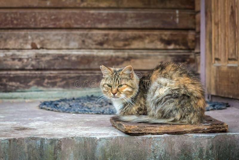 Ljust rödbrun randig katt som sitter på den åldriga farstubron nära dörr av det gamla trähuset fotografering för bildbyråer