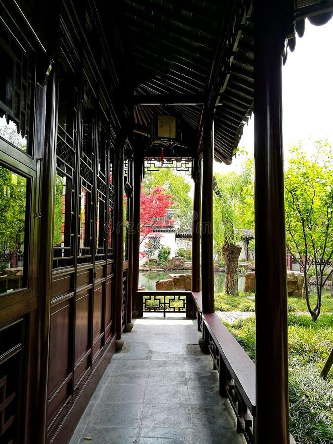 Ljust rött acerträd i Suzhou den klassiska trädgården arkivfoto