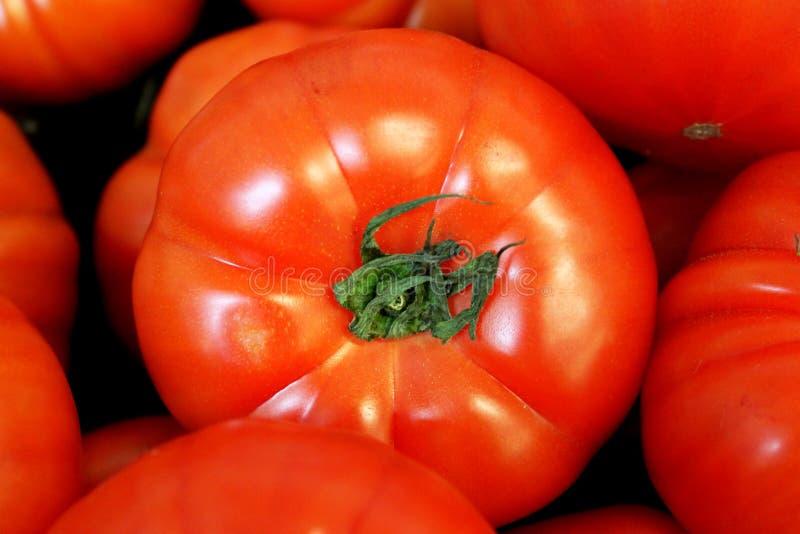 Ljust rött - läcker tomat med den gröna stammen bland andra tomater arkivfoto
