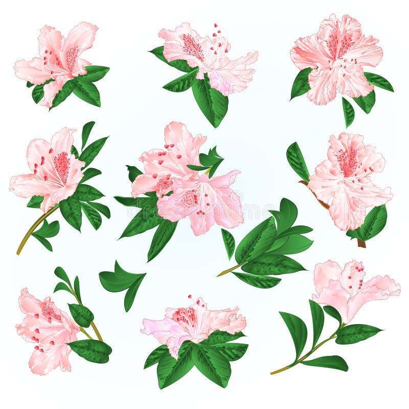 Ljust - rosa buske för blommarhododendron- och sidaberg på en redigerbar blå illustration för bakgrundstappningvektor stock illustrationer