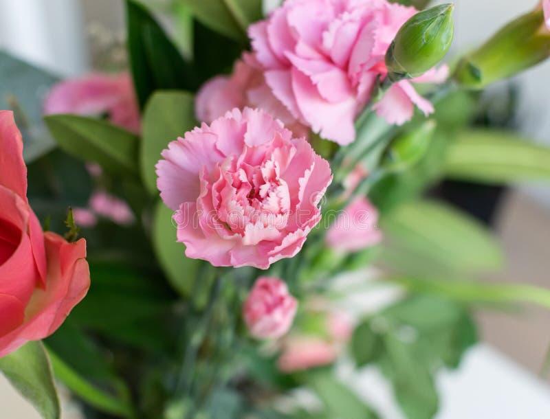 Ljust - rosa röd blommabukett Inomhus med vit bakgrund royaltyfri fotografi