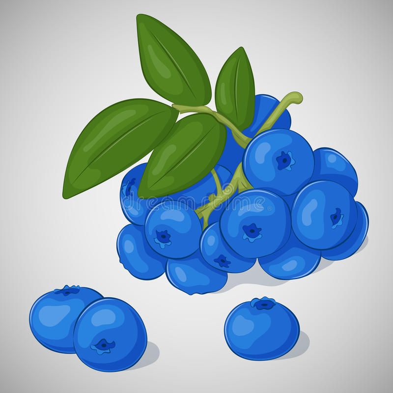 Ljust saftigt blåbär på grå bakgrund Sött läckert för din design i tecknad filmstil också vektor för coreldrawillustration bär vektor illustrationer