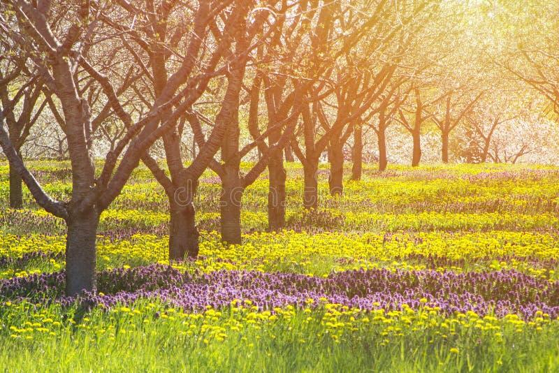Ljust sol och fält för himmel med varmt begrepp för natur och emotionell prickfri skönhet för färger och med copyspace royaltyfri bild