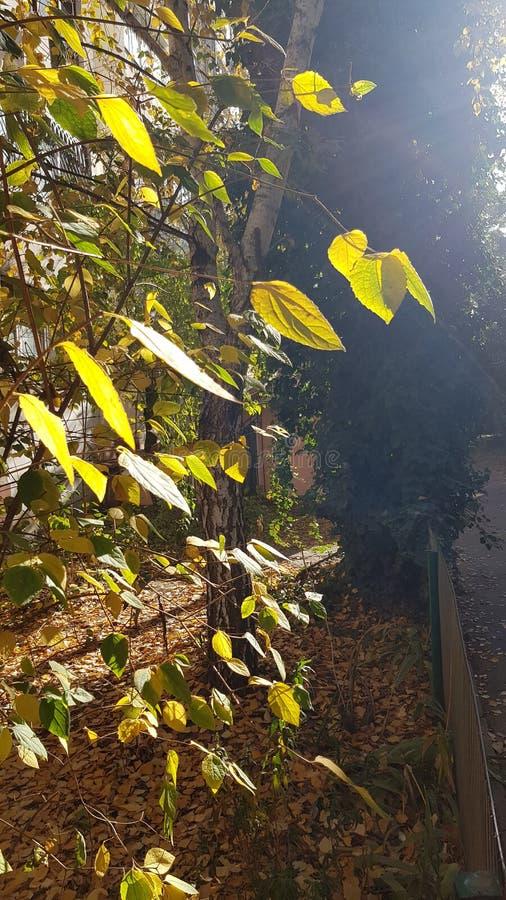 Ljust solljus på höstträdlövverk i soligt nedgångväder royaltyfri foto