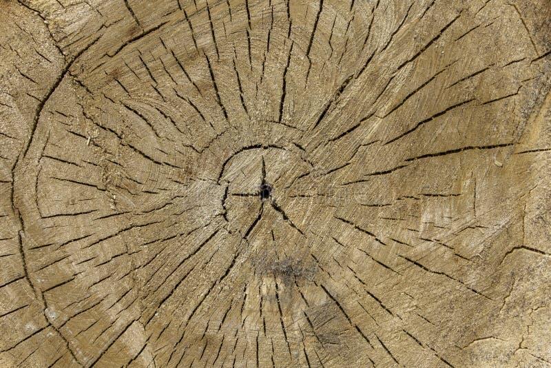Ljust trä för rundasnitt med sprickor ?rlig rings naturlig yttersidatextur arkivbilder