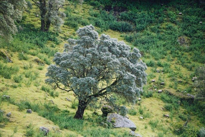 Ljust träd med får royaltyfria foton