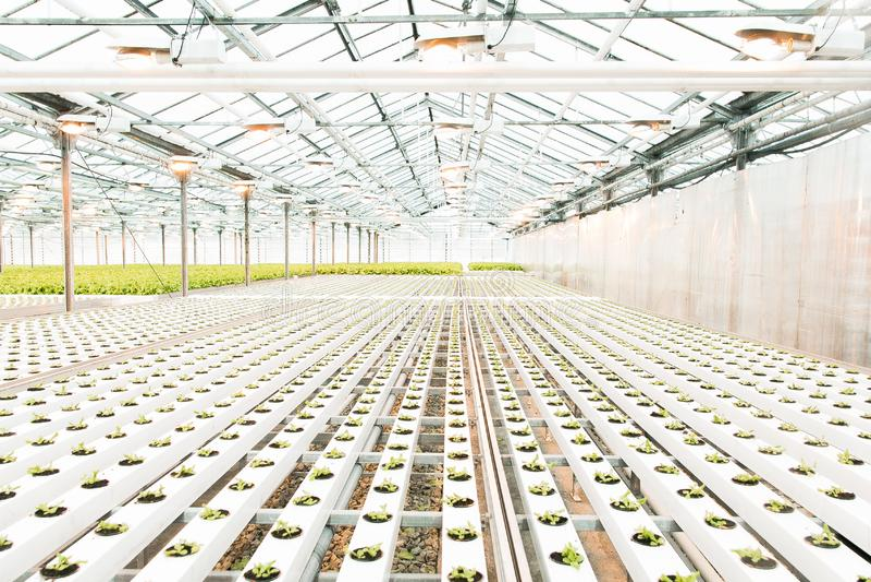 ljust växthus och produktionen av frukter och grönsaker arkivfoto