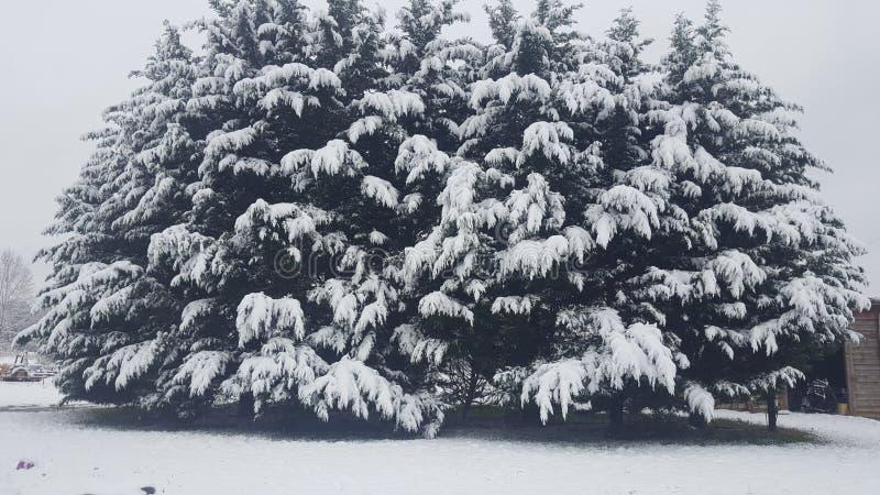 Ljuvt pälsträd arkivfoto