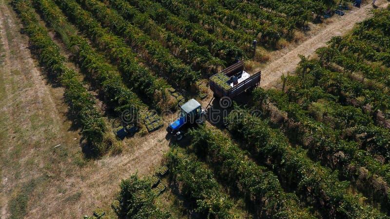 LKW unter Reihen des Weinbergs bevor dem Ernten lizenzfreies stockfoto