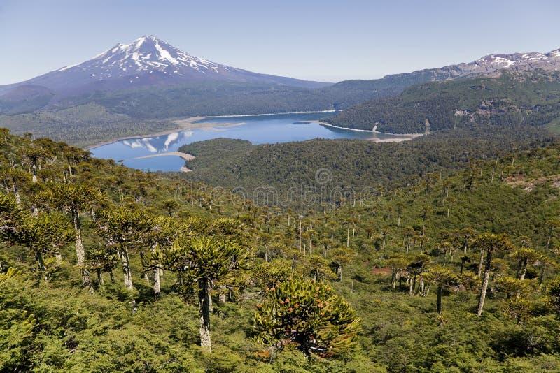 Llaima vulkan från den Conguillio nationalparken royaltyfria bilder