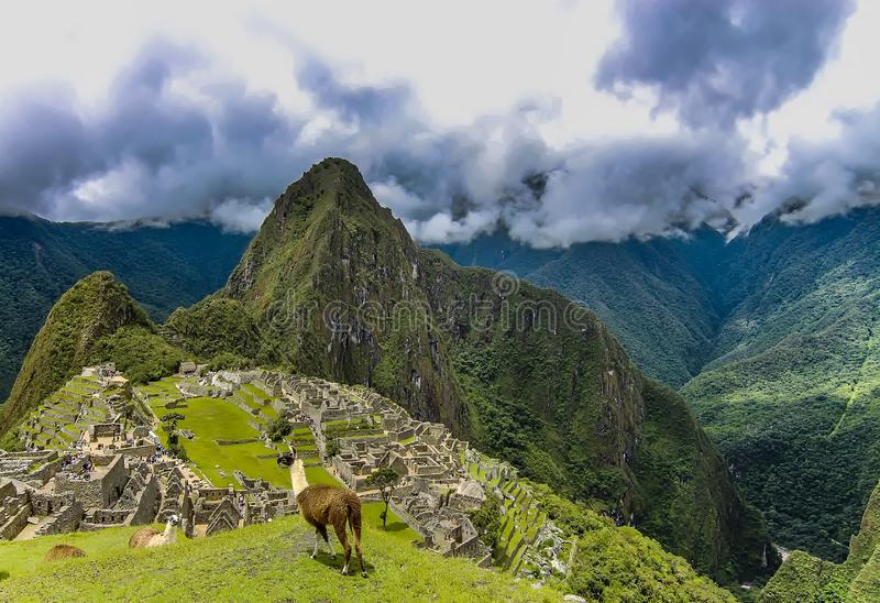 Llama δύο σε μια περιοχή οροπέδιων σε Machu Picchu στοκ φωτογραφία με δικαίωμα ελεύθερης χρήσης
