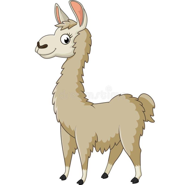Llama κινούμενα σχέδια απεικόνιση αποθεμάτων