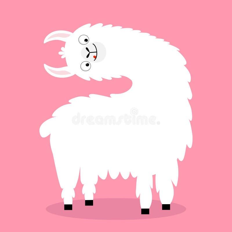Llama προβατοκάμηλος που γυρίζει το επικεφαλής πρόσωπο, γλώσσα Χαριτωμένος χαρακτήρας kawaii κινούμενων σχεδίων αστείος Χνουδωτή  ελεύθερη απεικόνιση δικαιώματος