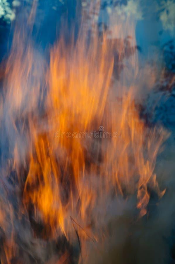 Llama alta y potente del fuego contra la perspectiva de ?rboles verdes en el bosque imagenes de archivo