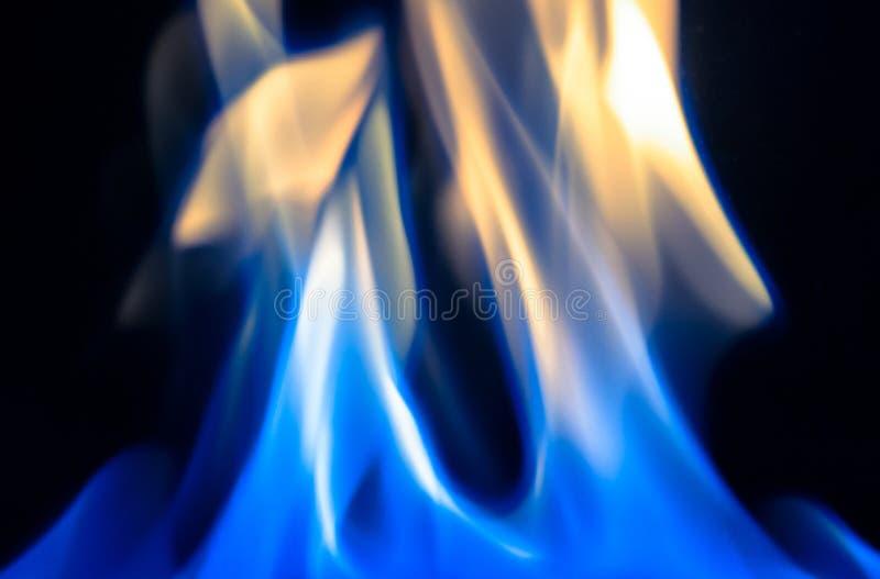 Llama azul imágenes de archivo libres de regalías