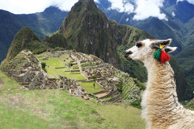 Download Llama At  Lost City Of Machu Picchu - Peru Stock Photo - Image: 17968862