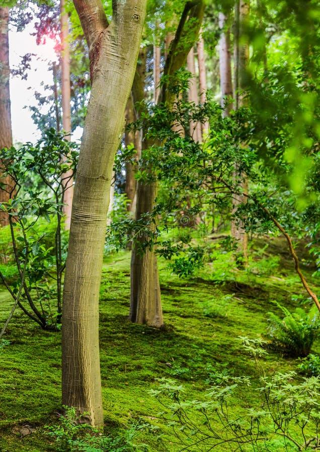Llamarada de Sun a través de árboles jovenes imagen de archivo libre de regalías