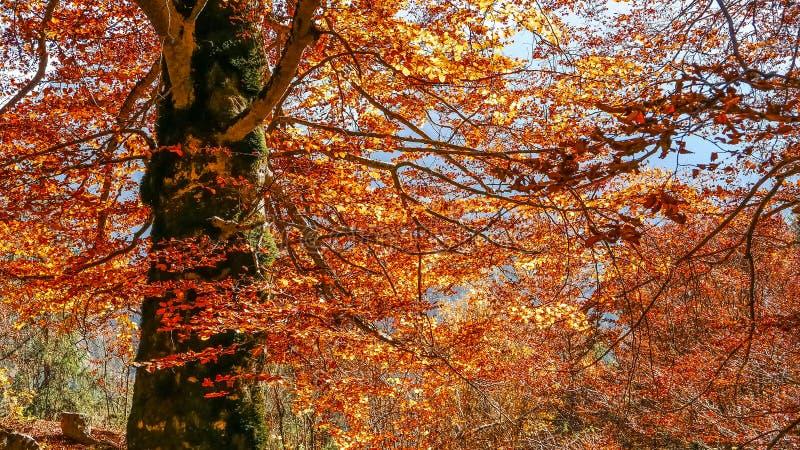Llamas del otoño sobre el árbol foto de archivo libre de regalías